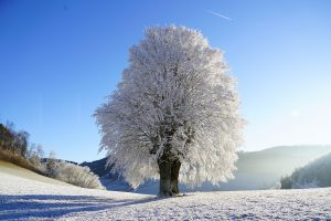 tree-1959267_1280